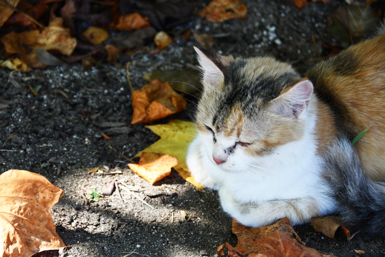 地面に箱座りする野良猫1