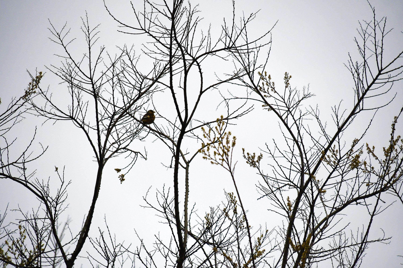 寒空にたたずむ小鳥