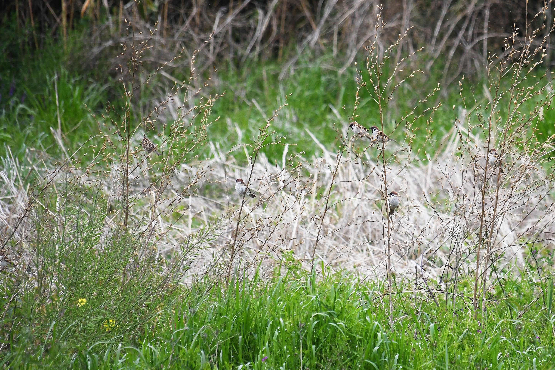茂みに集まる雀の群れ