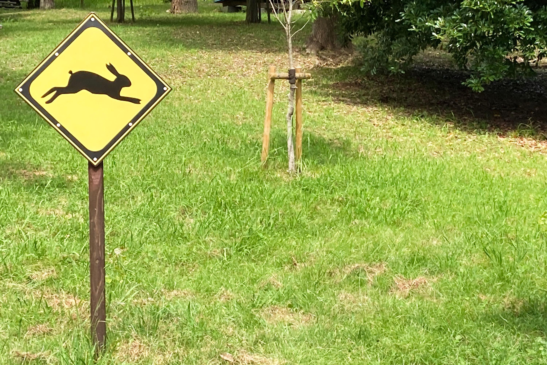 ウサギ飛び出し注意の看板