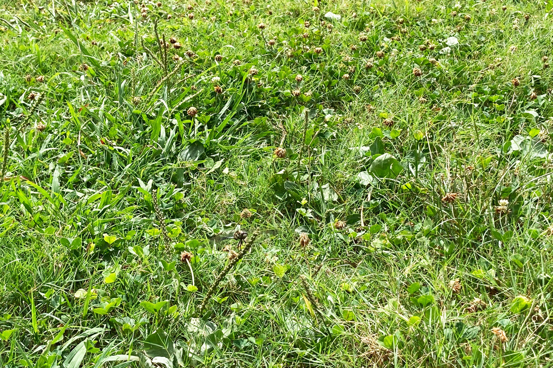 草むらにトンボがかくれんぼ