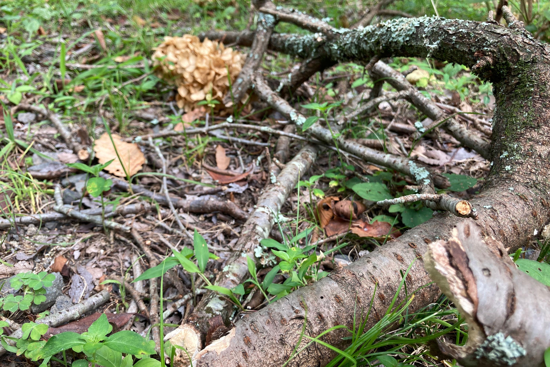 苔の付いた小枝