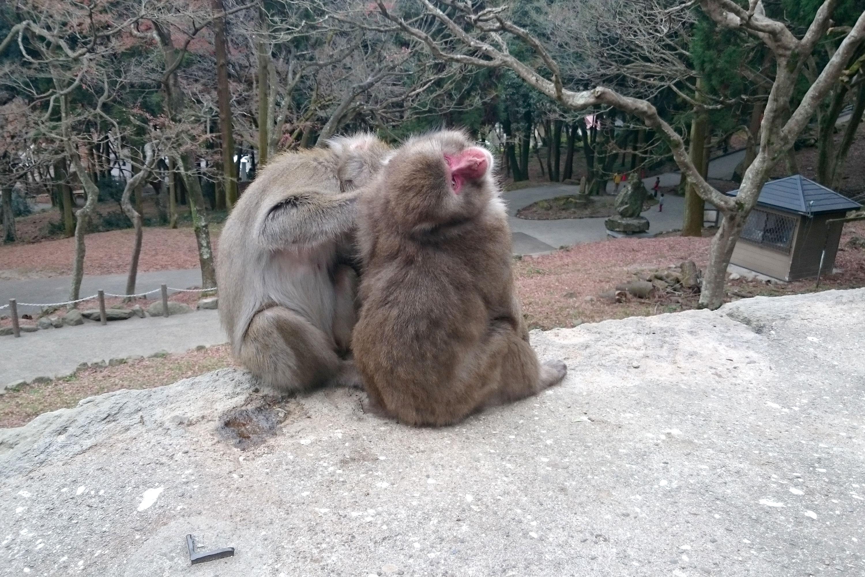 毛づくろいをする2匹の猿