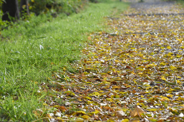 落ち葉の道2