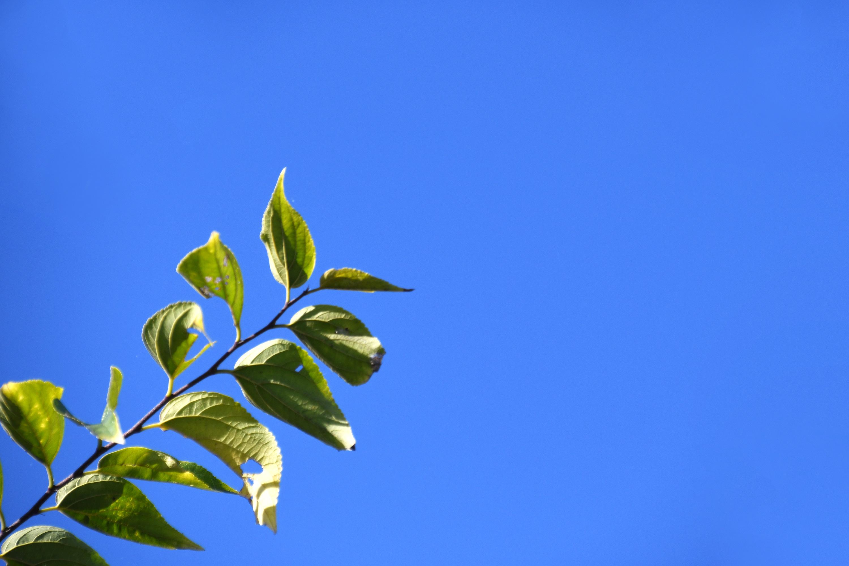 空に伸びる葉