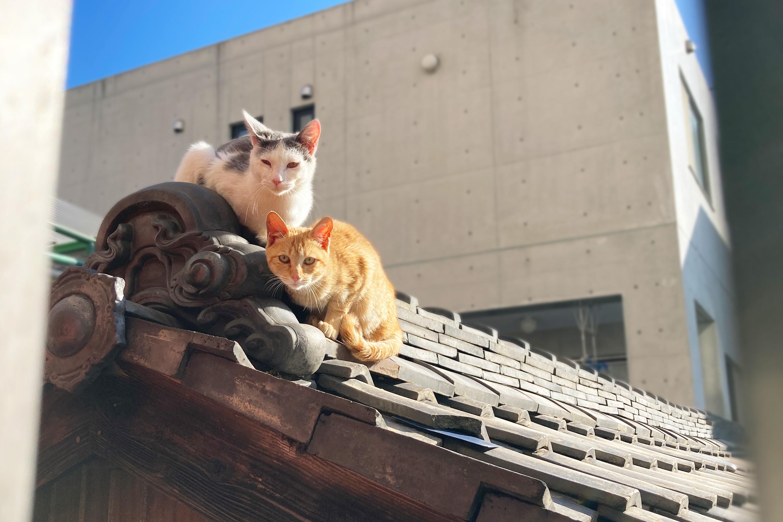 屋根の上の野良猫