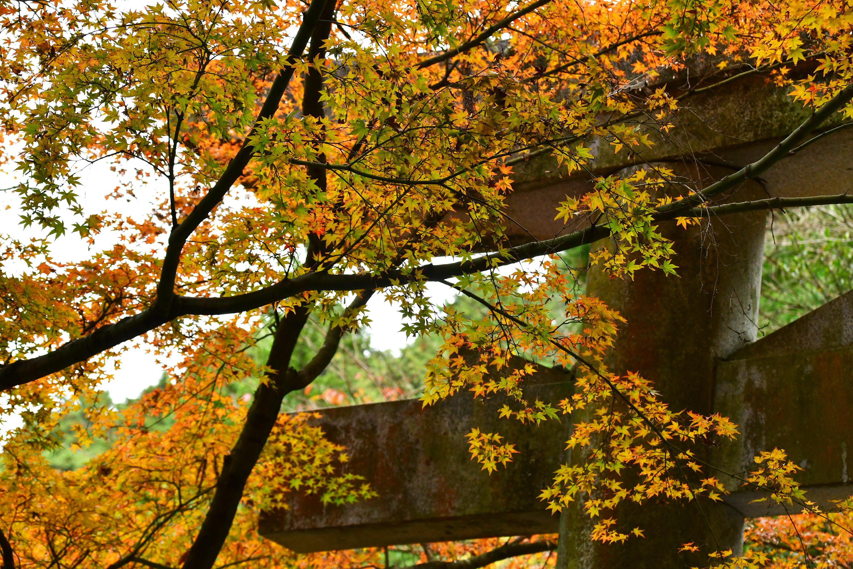 紅葉と鳥居