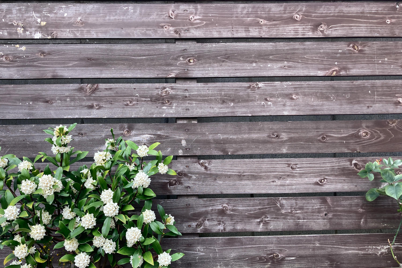 木の板と白いお花3