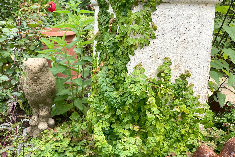 庭にあるフクロウの置物