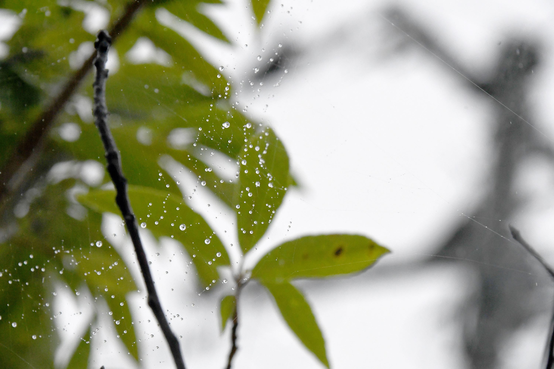 蜘蛛の巣に光る雨のしずく2
