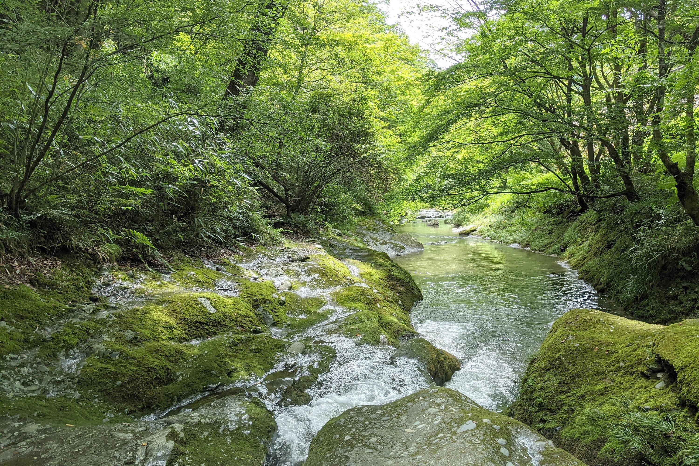 木々に囲まれた穏やかな川3