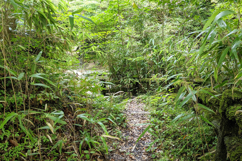 山の中にある木の階段