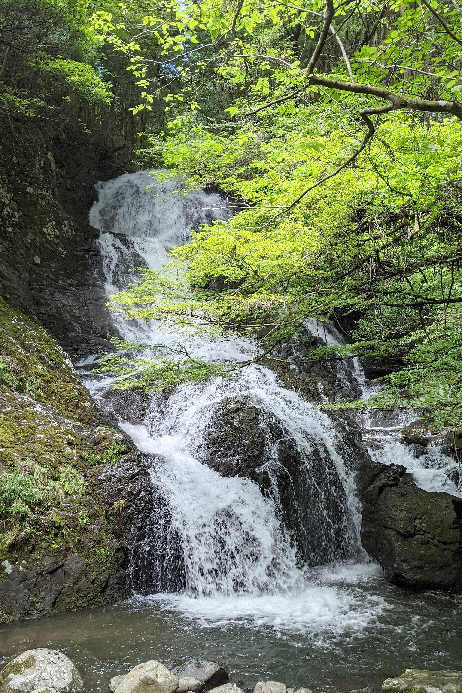 木々と滝(縦)
