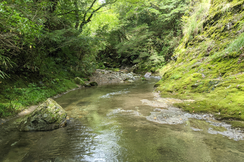 木々に囲まれた穏やかな川2