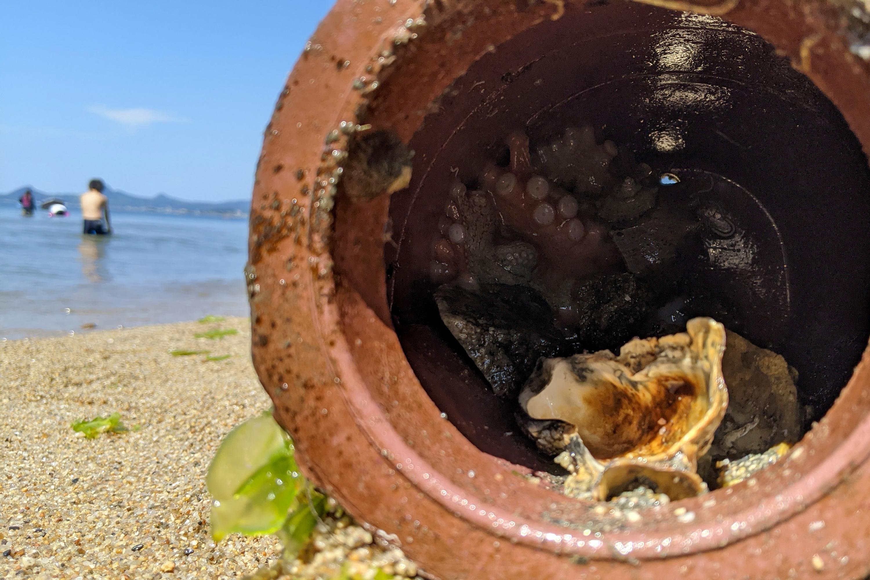 蛸壺と海岸