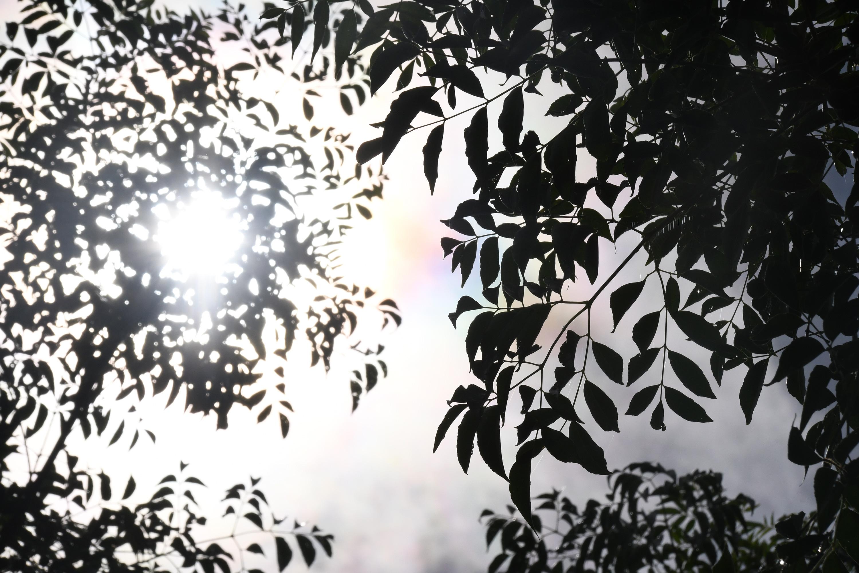 陰から見上げる葉っぱ越しの太陽